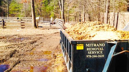 Horse Farms Mitrano Removal Service